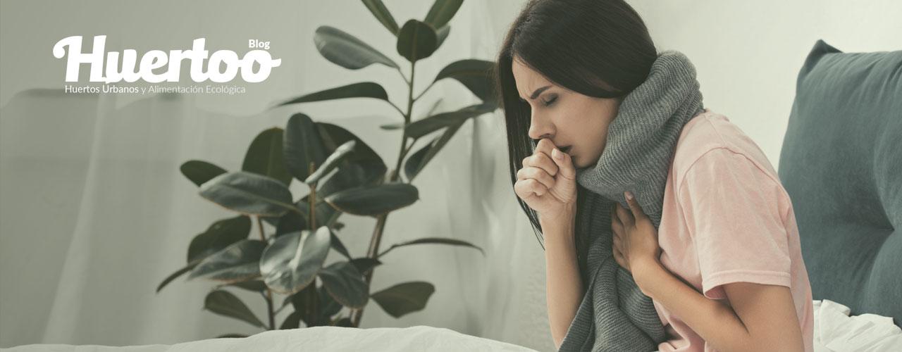 Cinco plantas aromáticas para prevenir la tos