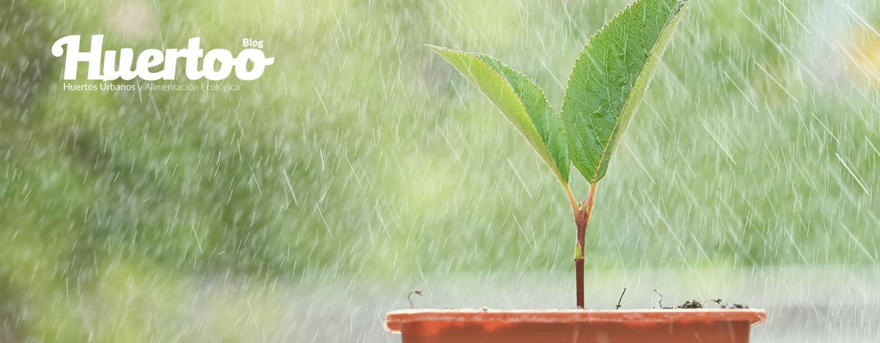 Qué plantar en Octubre en tu huerto urbano