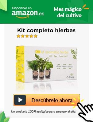 cultiva plantas aromaticas en huertoo